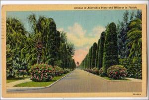 Ave of Australian Pines & Hibiscus, Florida