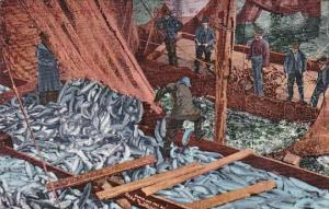 Columbia River Salmon Being Loaded Unto Boat Bellingham Washington