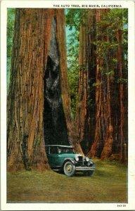 Vtg Postcard Big Basin California CA The Auto Tree C T American Art Colored UNP