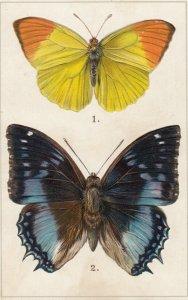 Africa Butterflies , 00-10s ; TUCK 403 ; Butterfly