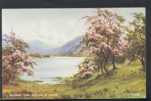 Cumbria Postcard - Blossom Time, Esthwaite Water   RS16467