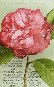 C.1910 Sacramento State Fair, Sacramento, California Postcard F88