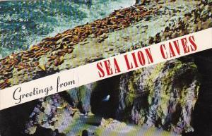 Greetings From Sea Lion Caves Portland Oregan