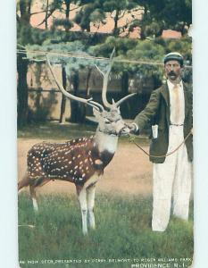 Pre-1907 DEER FROM INDIA AT ROGER WILLIAMS PARK Providence Rhode Island RI H4224