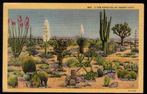 1940 US Sc #804 Postcard Varieties Of Desert Cacti Pictorial. Los...