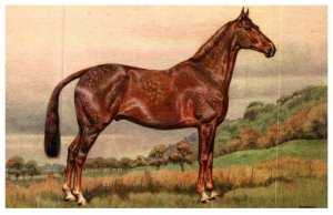 Horse ,  Hunter