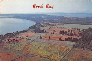 Birch bay -