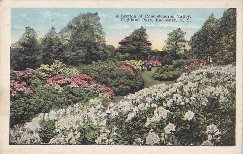 A Section Of Rhododendron Valley, Highland Park, Rochester, New York, 1910-1920s