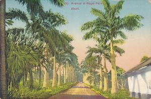 Ghana Aburi Avenue Of Royal Palms