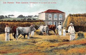 Spain Old Vintage Antique Post Card Gran Canaria Las Palmas Writing on back