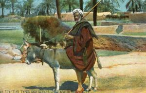 Egypt - Old Arab on Donkey