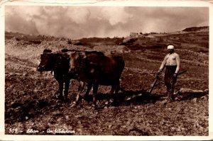 Lebanon Farmer A Ploughman 1955