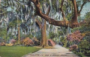 Walk In Magnolia Gardens Charleston South Carolina