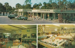 EVERGLADES , Florida, 1950-60s ; Royal Palm Hammock