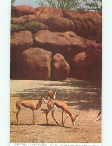St Louis Zoological Gardens Zoo Animals 1950's Antelope Deer Postcard # 8454