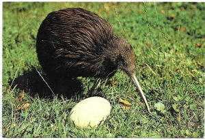 New Zealand. Kiwi and Egg.  Used with postage. Nice stamps.