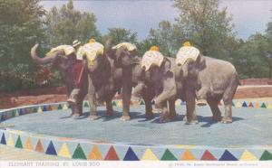 Elephants Elephant Traing At St Louis Zoo Trainer Floyd Smith