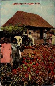 Postcard Gathering Pineapples, Cuba~2090