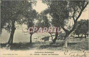 Postcard Old Nice Between Les Oliviers