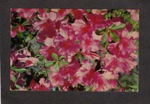 NC Azalea Festival Flowers Botany Greenfield Gardens Wilmington North Carolina