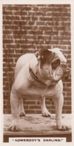 Somebodys Darling Bulldog Old Dog German Photo Dogs Cigarette Card