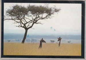 Giraffe in Savanna Grass , Kenya , Modern