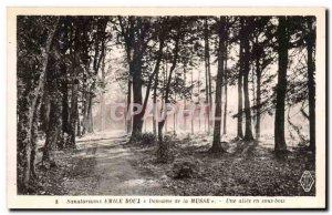 Old Postcard Sanatoriums Emile Roux Domaine de la Musse A driveway in the woods