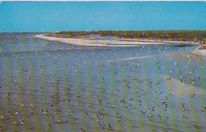 Florida Captiva Island Beautiful Tropical Birds Bailey's General Store Of San...