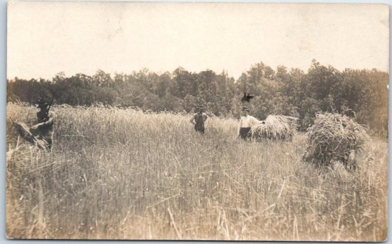 Vintage RPPC Real Photo Postcard FARMING SCENE Haying Field c1910s