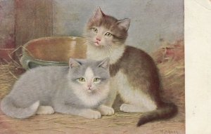 AS; Barn Kittens, PU-1906