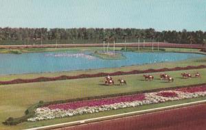 Florida Miami Horses Parading To The Post Hialeah Race Course 1955