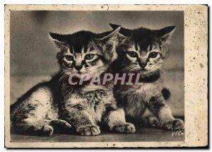 Modern Postcard Cats Kittens
