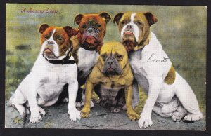 A Beauty Show - great Bulldogs card - Valentine series