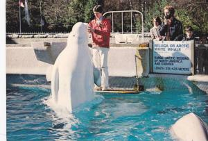 Beluga Whales , vANCOUVER , B.C. , Canada , 40-60s