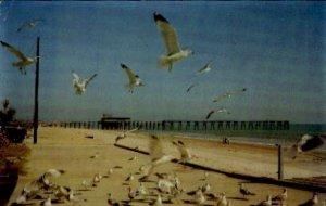 Seagulls on the Boardwalk - Myrtle, South Carolina