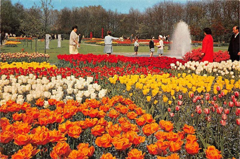Netherlands Lisse Keukenhof Flowers Blumen Fountain Tulips