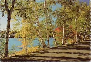 Mirror Lake Drive Lake Placid New York NY Autumn Adirondacks Postcard D52