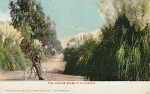 Pampas Grass in California, 10-20s