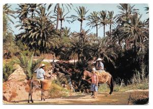 Tunisia Gabes Les Oasis Mule Donkey Sc 352 356 Postcard