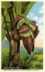 FL - Banana Tree
