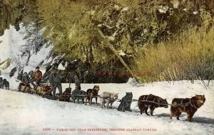 Circa-1910 Mitchell Alaska Postcard: Dog Sledding Freight Through Canyon