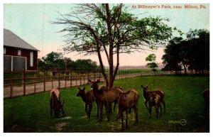 Pennsylvania  Milton , Billmeyers Park , deer