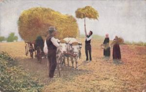 Farmers Loading Ox Cart With Hay 1908