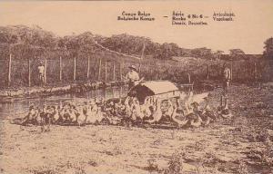 Belgian Congo Aviculture