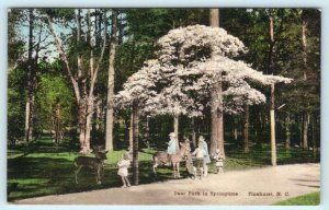 PINEHURST, North Carolina NC ~ Handcolored DEER PARK Springtime 1939  Postcard