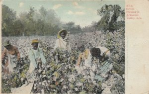 Arkansas Valley , Arkansas , 1909 ; Cotton Picking