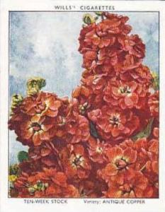 Wills Vintage Cigarette Card Garden Flowers 1938 A Series No 36 Ten Week Stoc...