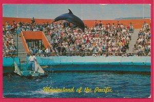 H-003 - Marineland of the Pacific in Rancho Palos Verdes, CA Souvenir Postcard