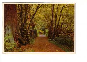 Autumn Path, Stanley Park, Vancouver, British Columbia, Photo Vilma Dvorak