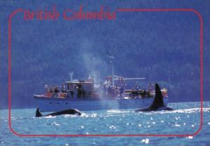 Canada Whale Watching In British Columbia